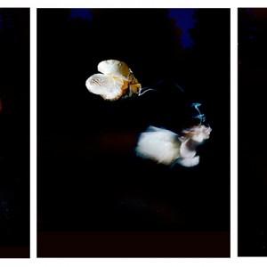 """""""BOG no.7"""", 2013, triptych, each ca. 110x90cm, C-Print analog, 2+1 AP"""