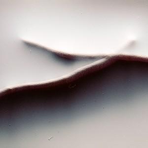 """REL II no.26"", 2013, ca. 90x110cm, photogram on colorfilm/C-Print, 2+1 AP"