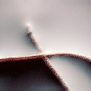 """REL II no.33"", 2013, ca. 90x110cm, photogram on colorfilm/C-Print, 2+1 AP"