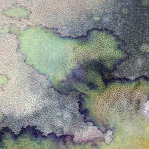 WATSCASCH no.4, detail, 2011, scan/Fine Art Print
