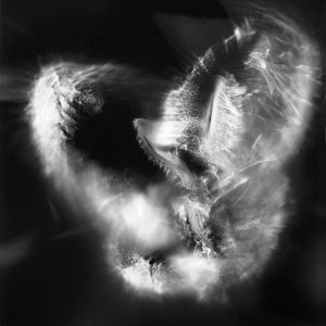 """Aquila No.5″, 2016, ca. 120x90cm, photogram on colorfilm/C-Print analog, 2+1 AP"