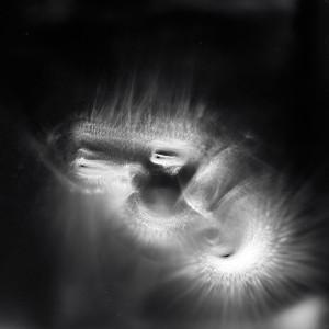 """LGN8 no.5″, 2016, ca. 100x120cm, photogram on colorfilm/C-Print analog, 2+1 AP"