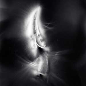 """AZA no.8″, 2017, ca. 130x100cm, photogram on colorfilm/C-Print analog, 2+1 AP"