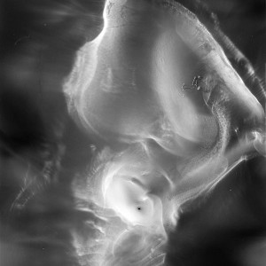 """BN no.13″, 2019, ca. 130x100cm, photogram on colorfilm/C-Print analog, 2+1 AP"
